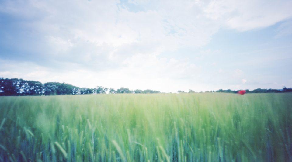 Panorama Getreidefeld mit Mohnblüte aufgenommen mit einer Lochkamera