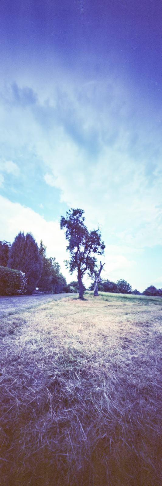 Panorama Wiese mit Baum aufgenommen mit einer Lochkamera