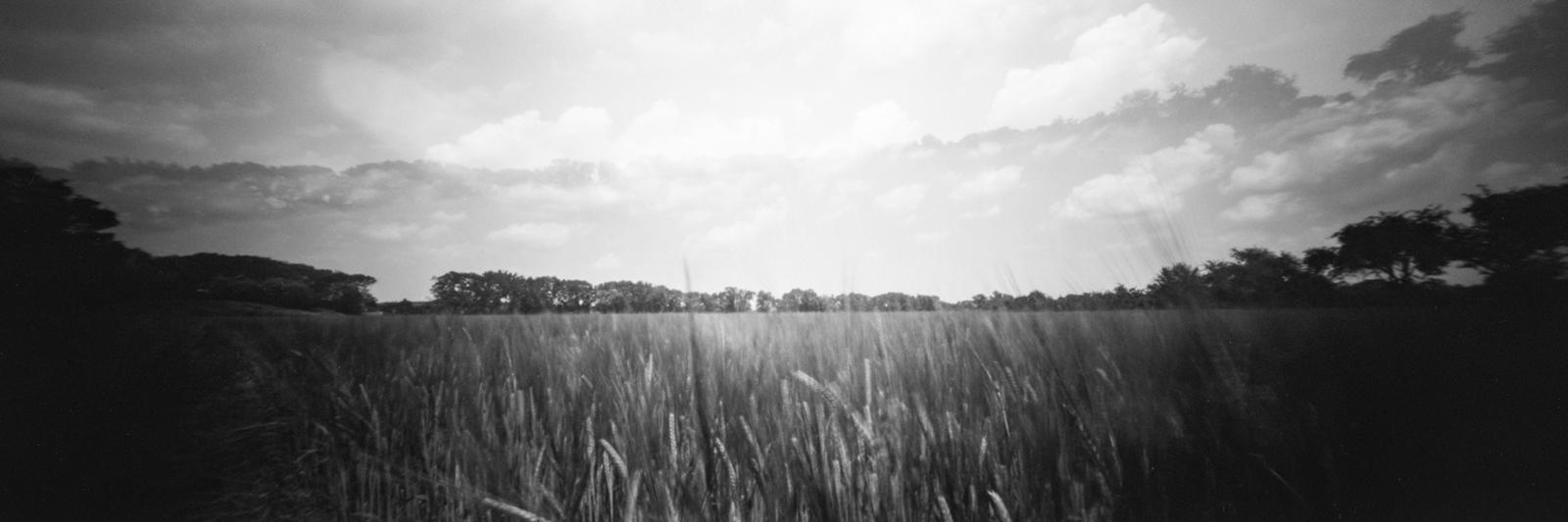 Doppelbelichtung Panorama Getreidefeld mit Mohnblüte aufgenommen mit einer Lochkamera
