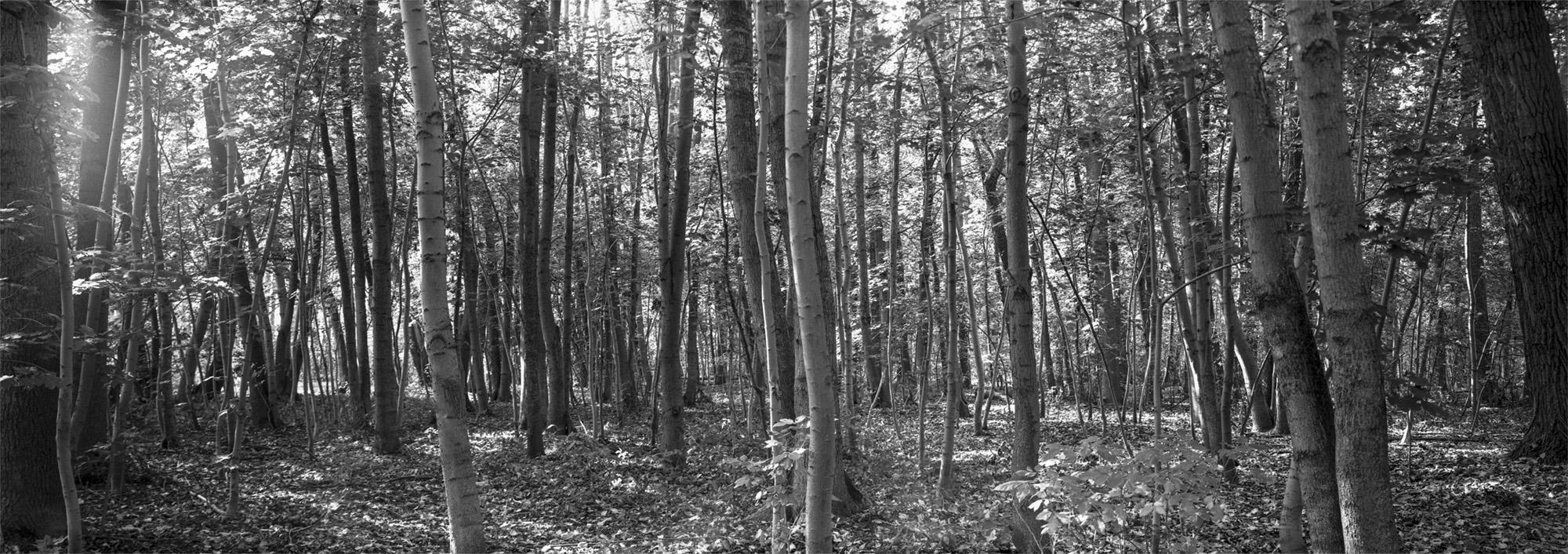 6x17 Panorama Wald Kleinmoelsen Grossformatkamera analog