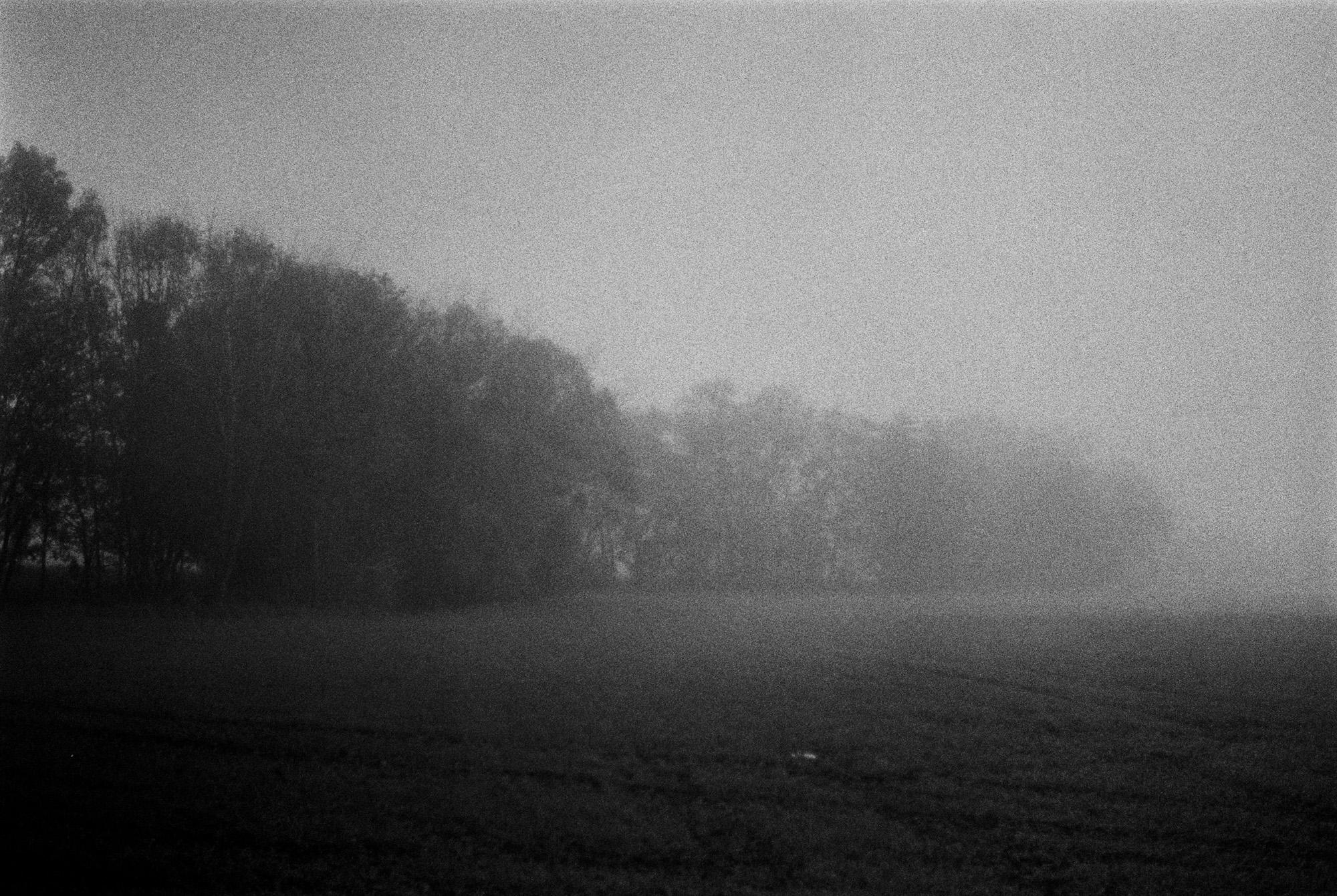 Baeume im Nebel