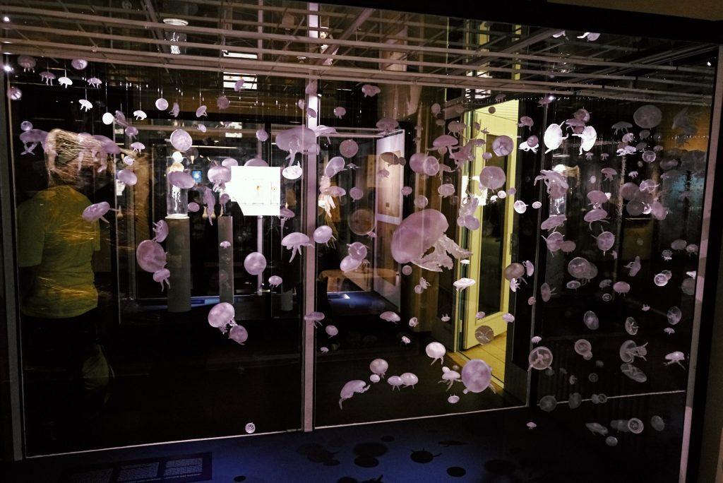 Quallen im Phyletischen Museum bearbeitet mit Capture One