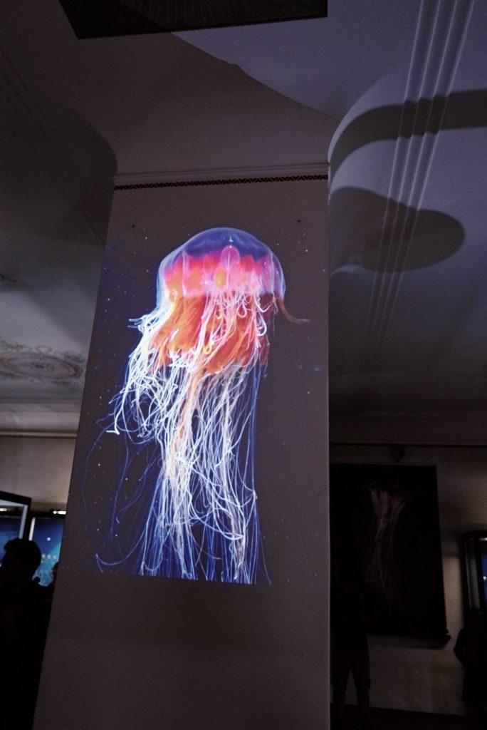 Projektion einer Qualle im Phyletischen Museum bearbeitet mit Capture One