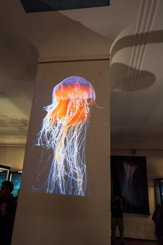 Projektion einer Qualle im Phyletischen Museum bearbeitet mit Lightroom