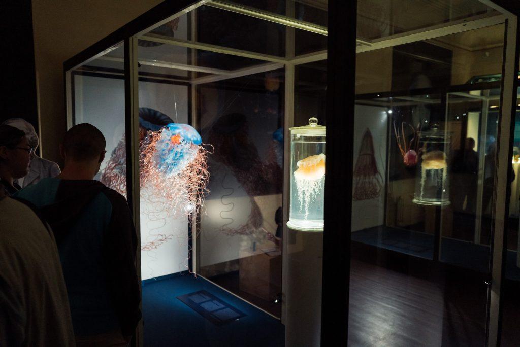 Quallen im Phyletischen Museum bearbeitet mit Lightroom