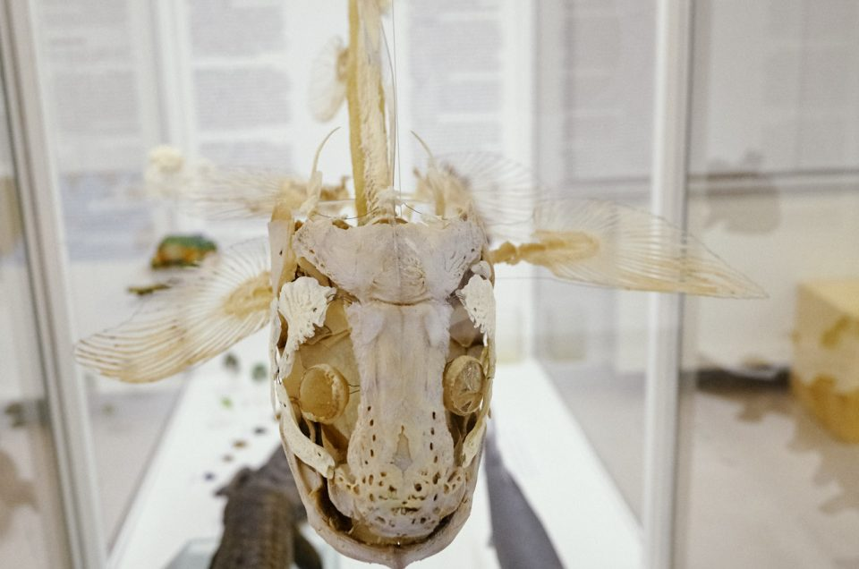 Fischskelett im Phyletischen Museum bearbeitet mit Capture One
