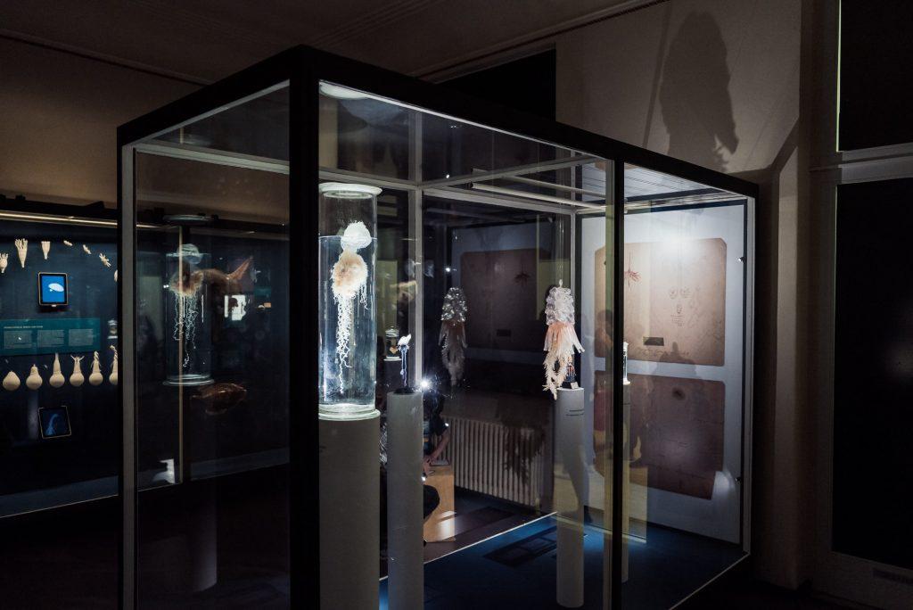 Quallen im Phyletisches Museum