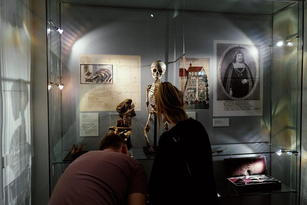 Skelett eines Fünfjährigen im Stadtmuseum Jena bearbeitet mit Capture One