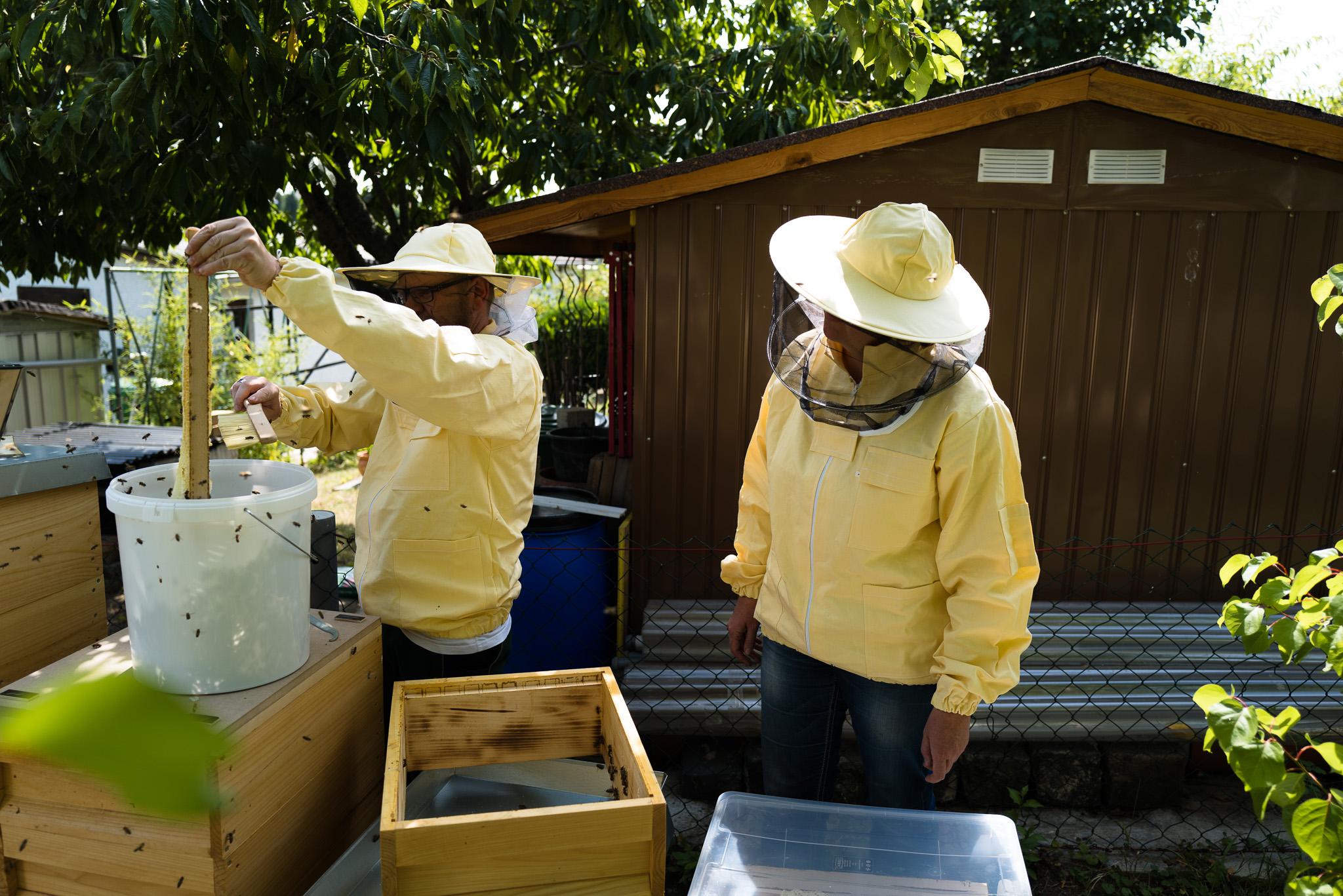 Imker - Ernten der Honigrahmen