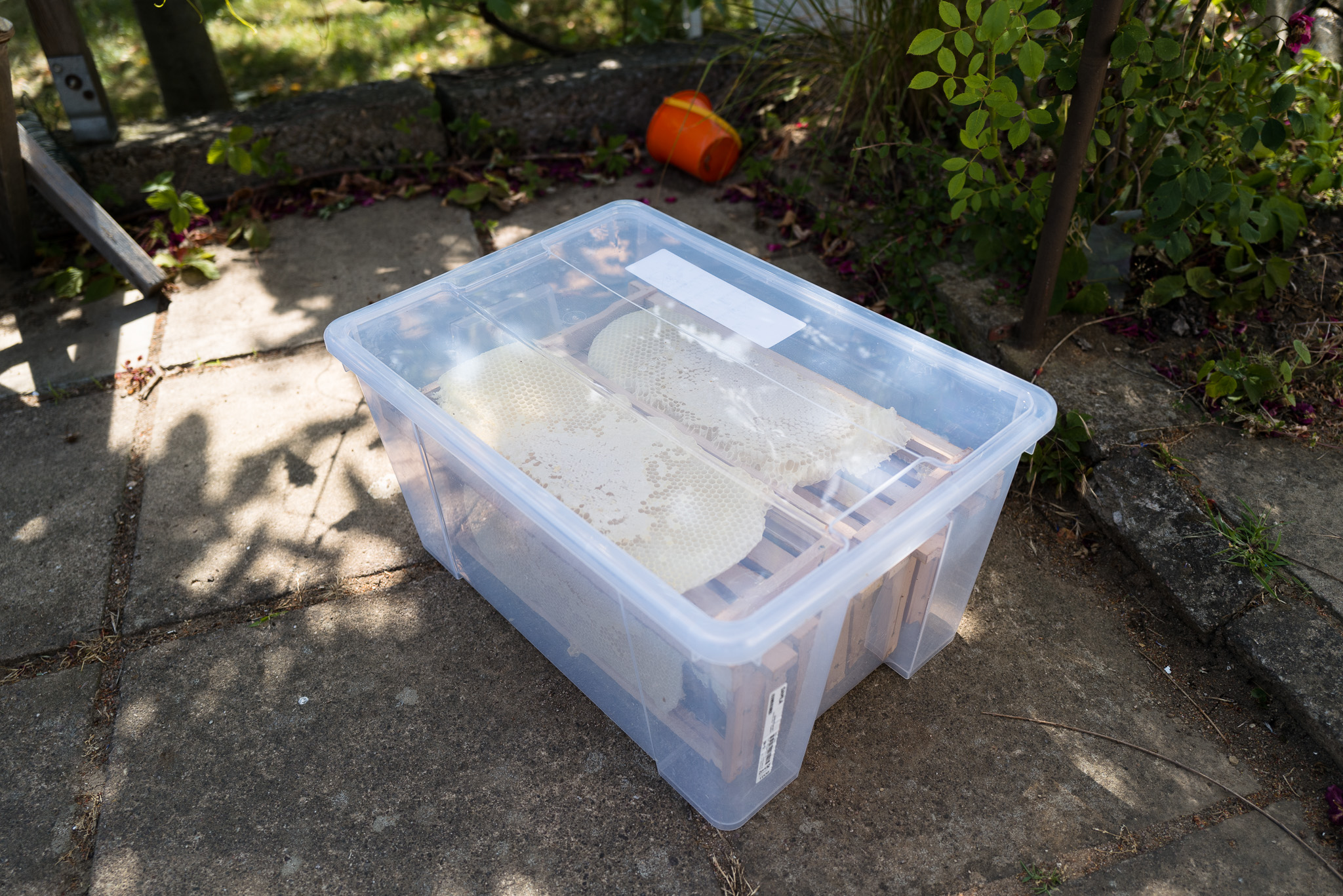 Imker - die Rahmen in einer Box