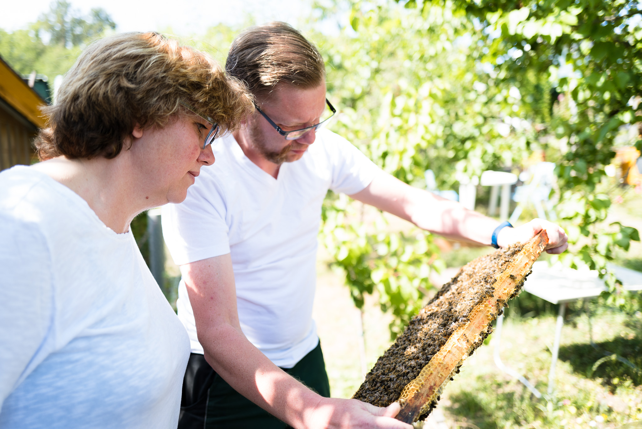 Imker - Ueberpruefung der Bienenstoecke